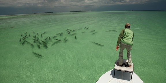 Epic tarpon shot of fish swimming down the clear oceanside flats.