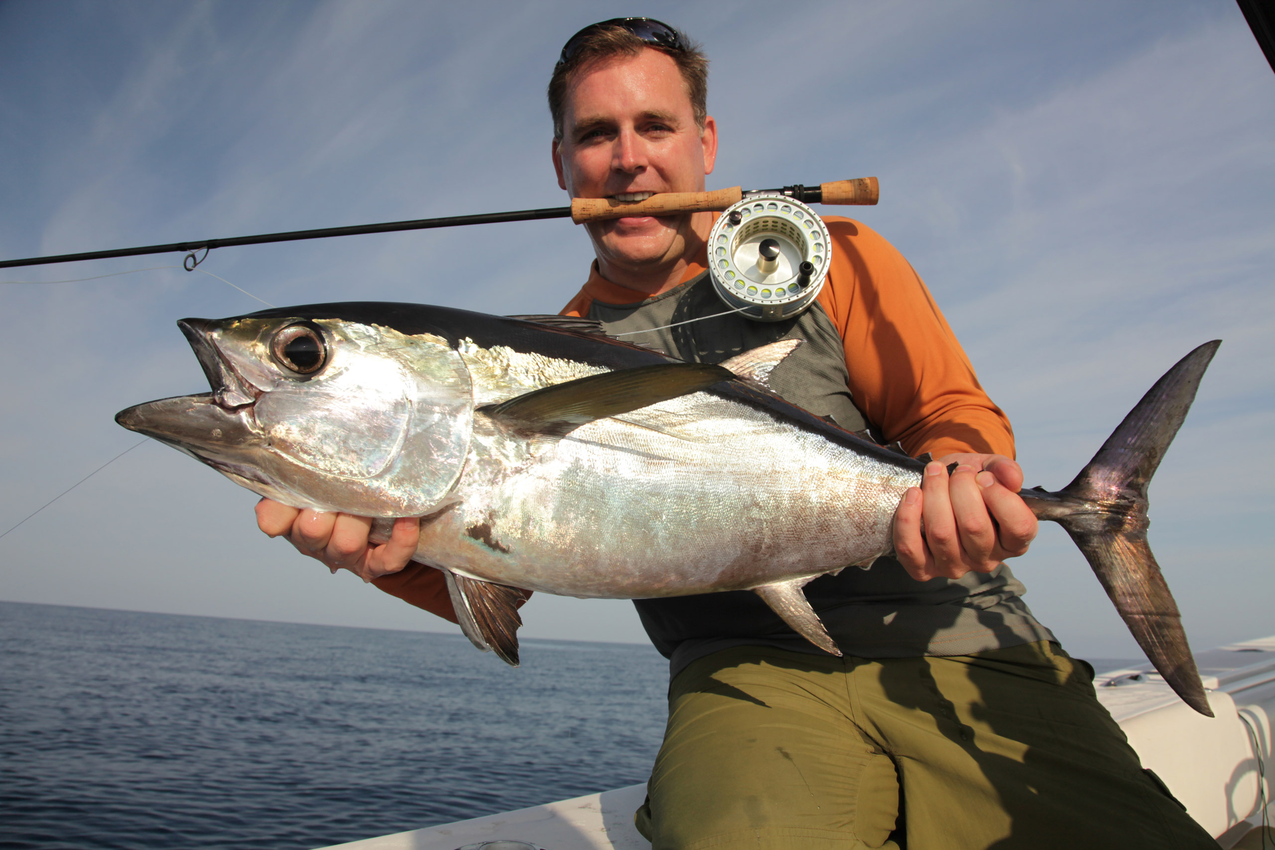 Beautiful blackfin tuna on fly.