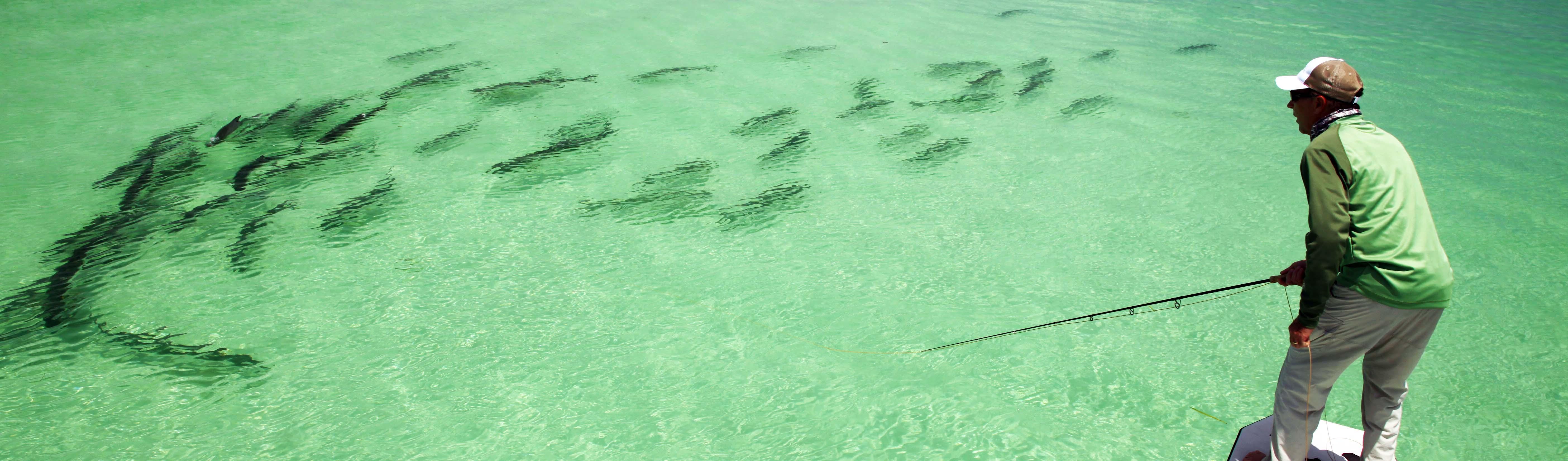 amazing string of migratory tarpon off Key West